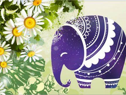 elefante-430x323