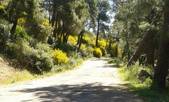 Pista-Forestal
