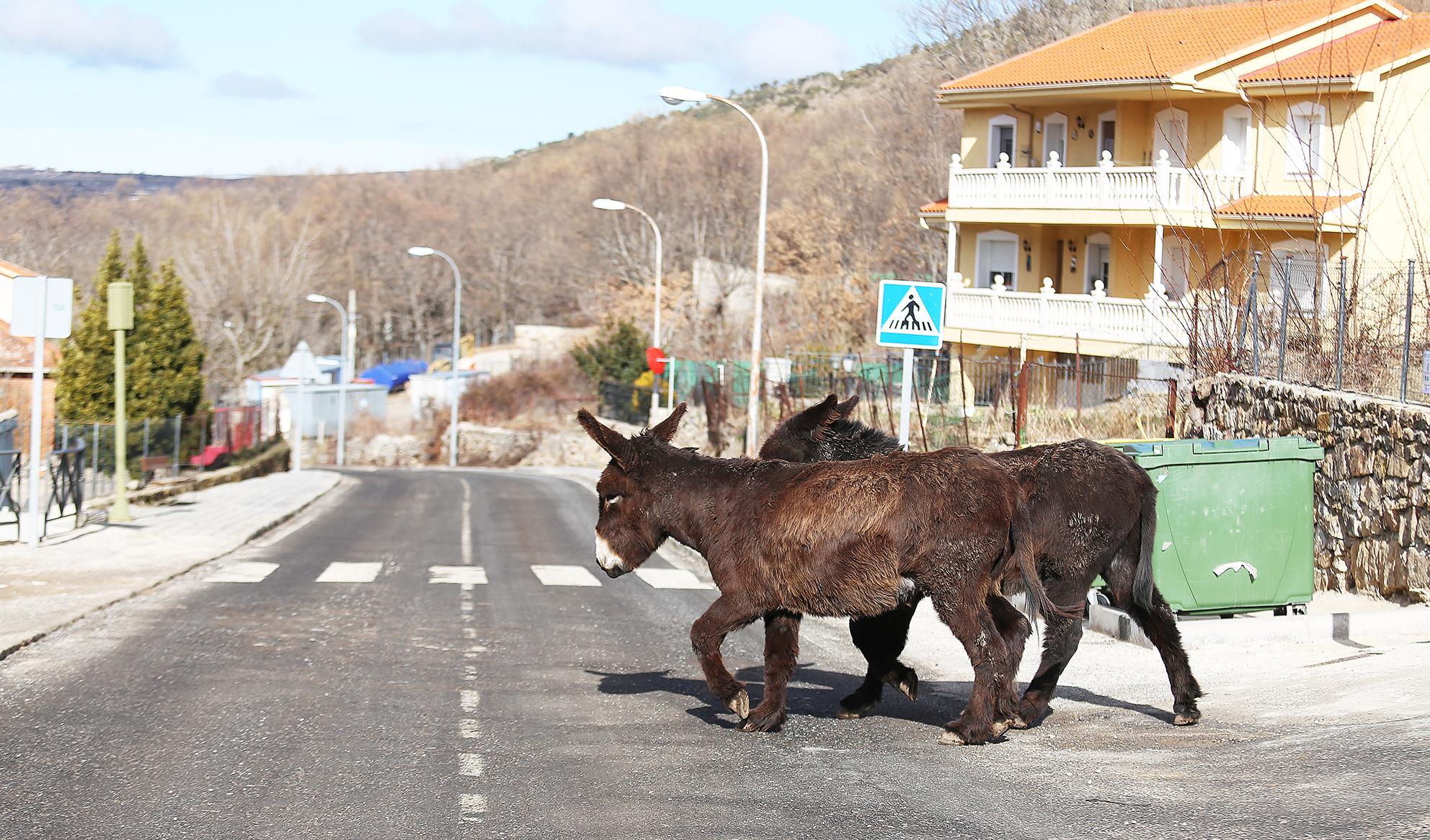 a ritmo de burro 5
