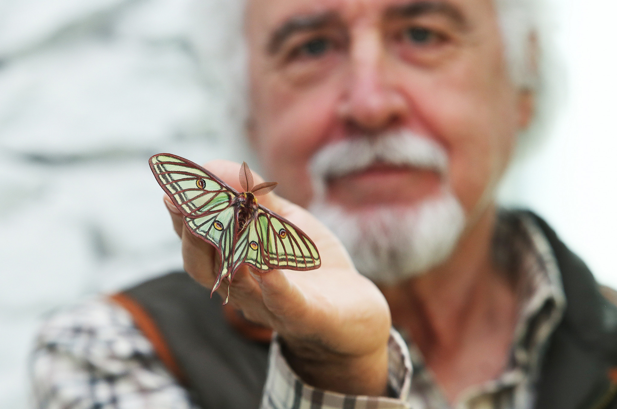 mariposa (1)