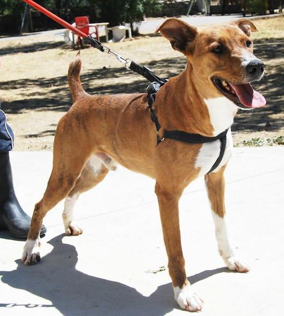 Centro de acogida de animales guadarrama