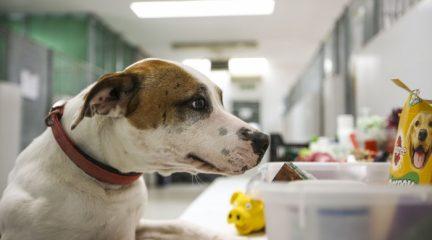 Las Rozas, primer municipio que reserva plazas en su Centro Animal para perros de personas sin hogar infectadas por coronavirus