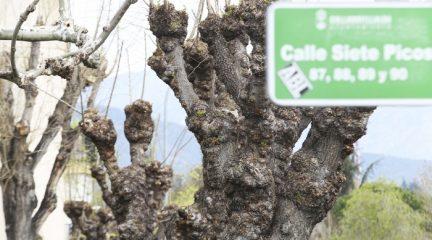 """Alertan de podas """"brutales"""" y """"antiestéticas"""" en la zona de Las Suertes, en Collado Villalba"""