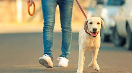 El Ayuntamiento de Navacerrada pone límites al paseo de perros durante el Estado de Alarma