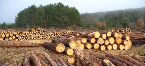 Así es cómo afecta la tala indiscriminada de árboles al medio ambiente y  quizá no lo sabías