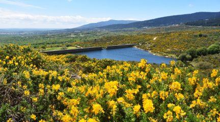 Primer Festival de la Floración del Cambroño en Los Molinos: un espectacular paisaje en amarillo