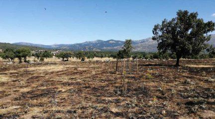 Moralzarzal cierra la Dehesa Vieja por las noches para evitar incendios como el ocurrido ayer