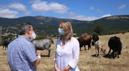 Una explotación ganadera de Cercedilla pionera en el uso de GPS para localizar a los animales recibe la visita de la consejera de Medio Ambiente, Vivienda y Agricultura
