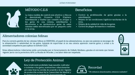 El Ayuntamiento de Collado Mediano y la protectora La Huella de Wonder, juntos en el control de las colonias felinas