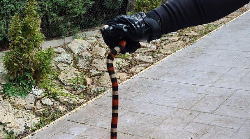 serpiente 02