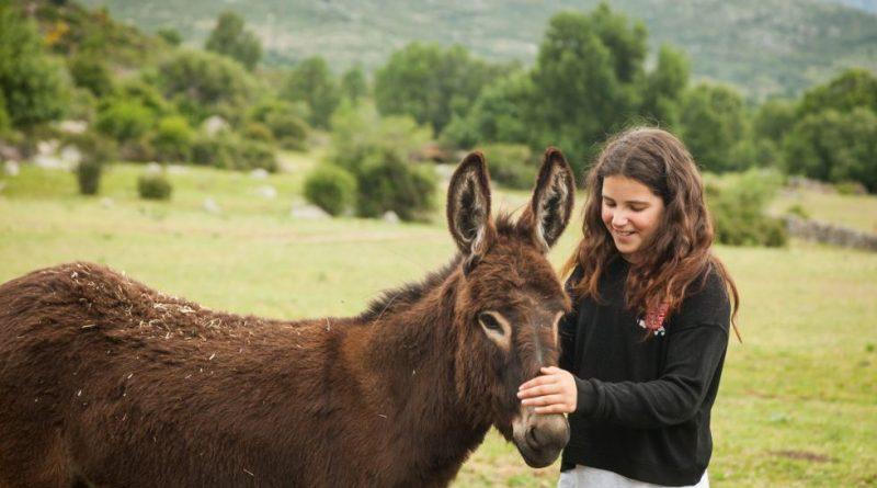 burro adesgam